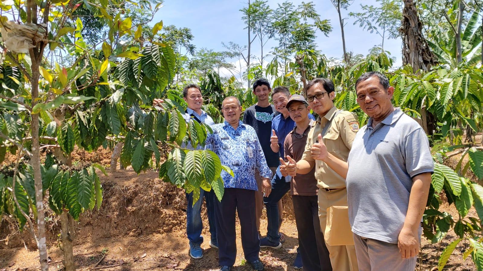 Indonesian coffee plantation