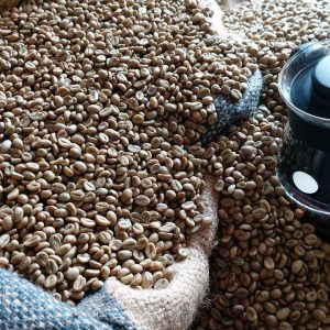 Robusta Coffee Beans Suppliers