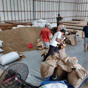 Arabica Coffee Beans Suppliers