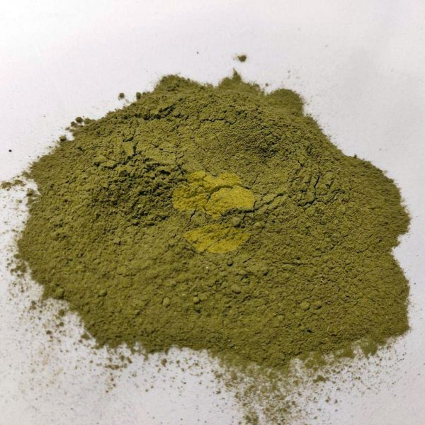 moringa tea suplier wholesale indonesia
